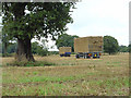 SK3937 : Tree and trailer by Alan Murray-Rust