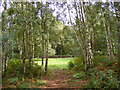 TL9386 : Woodland on Bridgham Heath by Adrian Cable