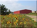 SU7352 : Sunflowers and red barn, Lodge Farm, Odiham : Week 35