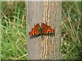TL0649 : Inverted Comma by M J Richardson