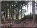 SJ4653 : Woodland, Parker's Hill by Richard Webb