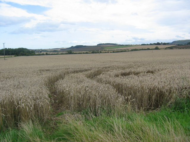 Wheat fields at Athelstaneford Mains