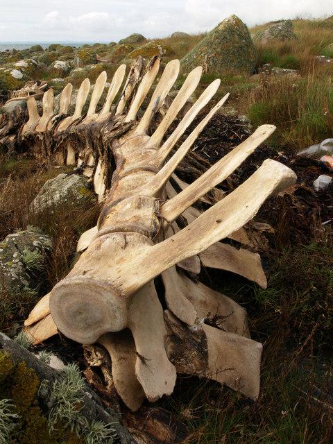 Dead whale, Chippermore