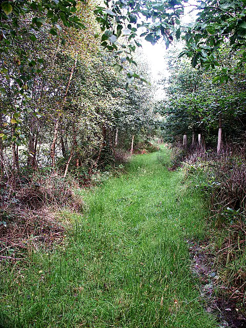 Path beside Twizell Lake