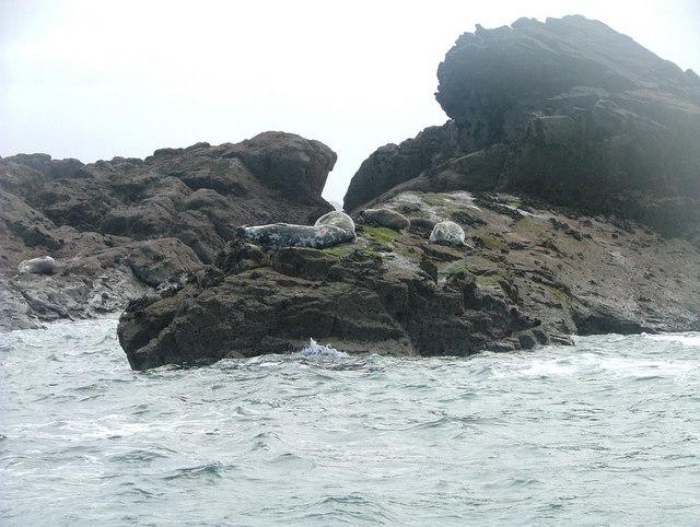 Atlantic seals on The Carracks