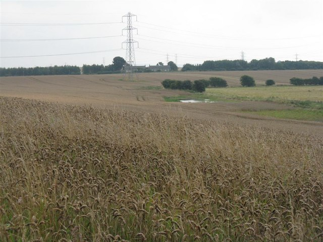 Wheat field at Broomhills