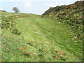 ST4101 : Ditch defence at Pilsdon Pen hill fort by Roger Cornfoot