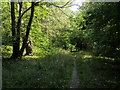 SU8396 : Footpath through Pimlock's wood by Shaun Ferguson