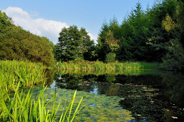 The Sylfâen Brook