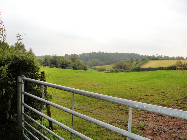 Norley - view of Delamere Forest from near Wickentree Farm