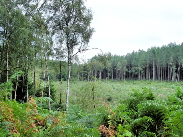 Manley - Delamere Forest - near  the crossing of the Delamere Way and the Sandstone Trail