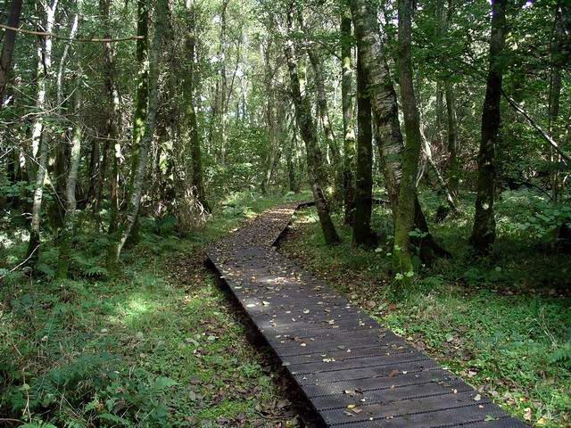 Carr woodland, Caerlaverock