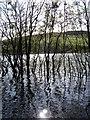 NT5132 : Flooding on Cauldshiels Loch : Week 39