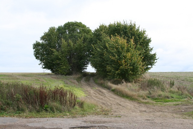 Trees flourishing off Ermine Street