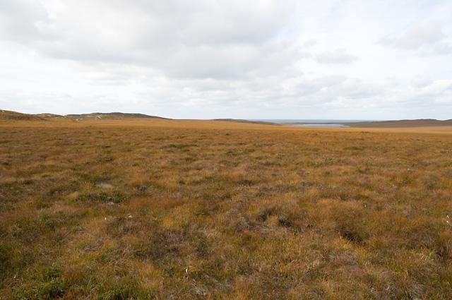 Boggy Moorland on Rubha Mòr