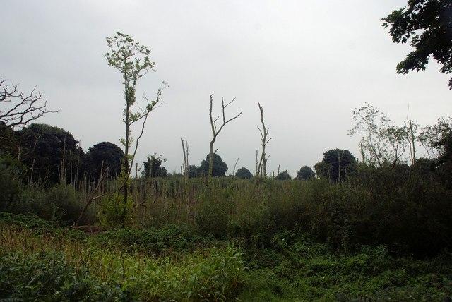 Devastated wood at Foxwist Green