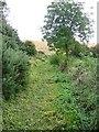 NZ3344 : Footpath alongside Pittington Hill by Roger Smith