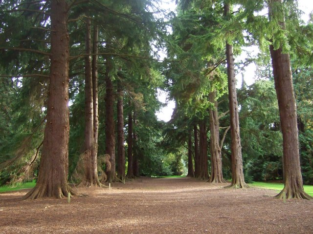 Old Pinetum, Scone Palace grounds.