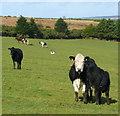 SX2385 : A pastoral scene by Jonathan Billinger