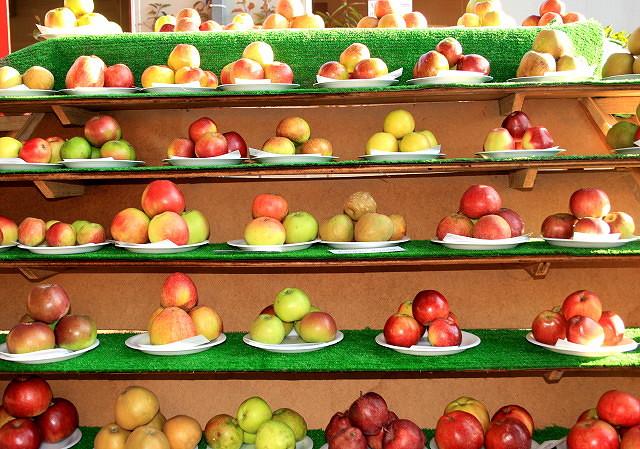 Apples, Blackmoor Fruit Nurseries