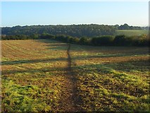 SU7478 : Farmland, Binfield Heath by Andrew Smith