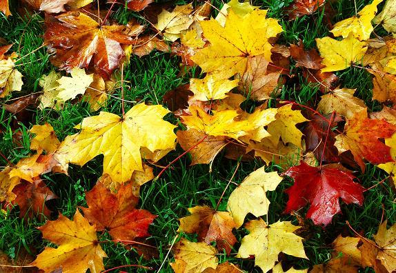 Autumn leaves, Dixon Park, Belfast (2)