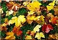 J3067 : Autumn leaves, Dixon Park, Belfast (2) by Albert Bridge