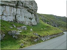 SH7783 : Great Orme Grazing by Gerald England