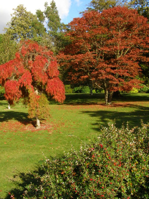 Red trees, Exbury Gardens by Jim Champion
