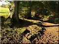SX8074 : Dartmoor Way below Rora Down (4) by Derek Harper