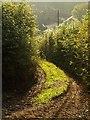 SX7874 : Dartmoor Way at Combe Farm by Derek Harper