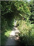 SU7251 : Canal towpath by Sandy B