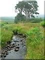 NR8796 : Burn and copse, Kilmichael Glen by Rich Tea