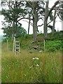 NR8796 : Copse, Kilmichael Glen by Rich Tea