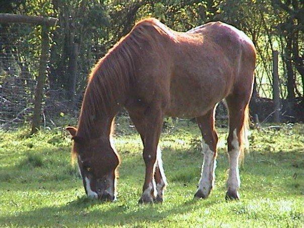 Pascoe grazing