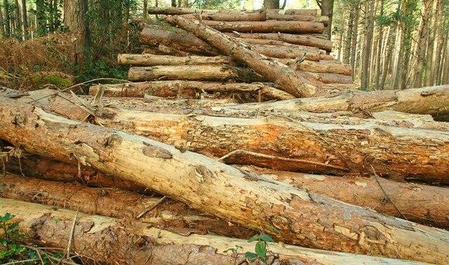 Woodstacks, Donard forest