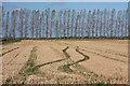 TL6589 : Stubble field at Feltwell Anchor by Bob Jones