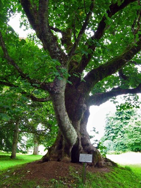 The Gallows Tree, Leith Hall