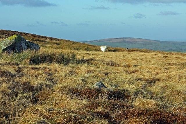 Rocky moorland with horses: Pen-lan-wynt, Cilgwyn