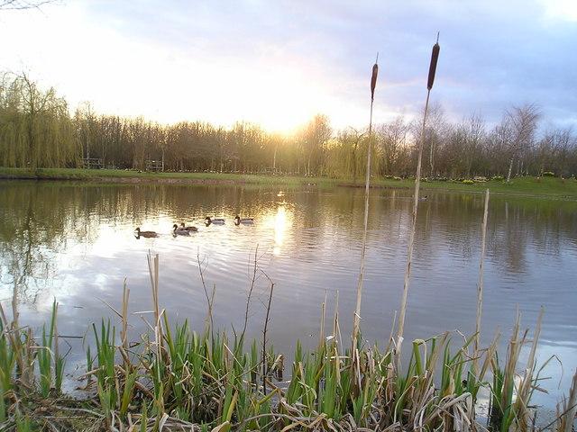 Pond in Heritage Wood
