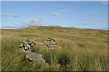NS3160 : Small enclosure & a view to Lairdside Hill by Leslie Barrie