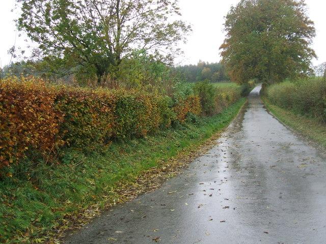 Beech hedge near Seat Hill