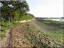 SU8302 : Looking S along the shoreline from Dell Quay by Nick Smith