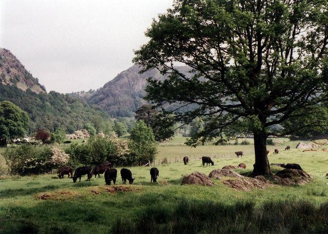 Meadows near Low Yewdale