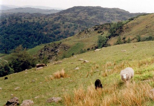 Slopes of Horse Crag
