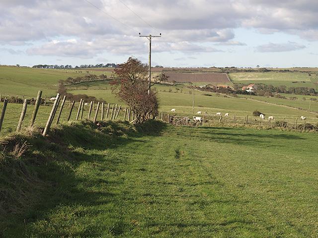 Farmland west of Newton Brow Farm