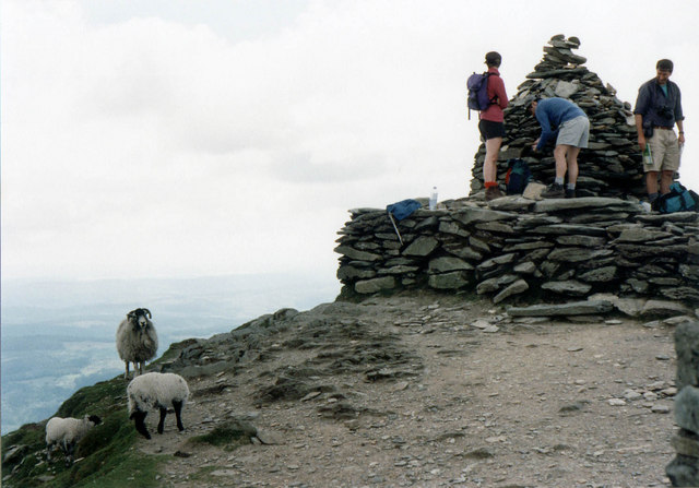 Sheep on the Old Man of Coniston summit