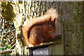 NY1421 : Red Squirrel by Andy Parkes