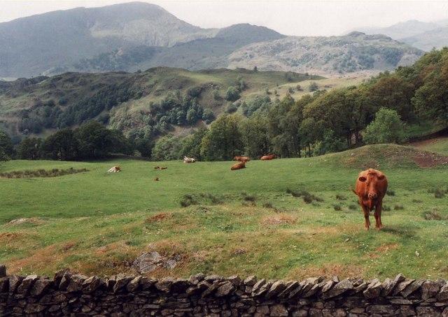 Pasture near Arnside Intake