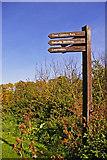 TQ2996 : Signpost in Trent Park, London N14 by Christine Matthews